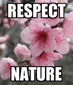 Poster: RESPECT NATURE