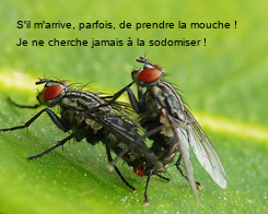 Poster: S'il m'arrive, parfois, de prendre la mouche ! Je ne cherche jamais à la sodomiser !
