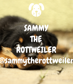 Poster: SAMMY THE ROTTWEILER @sammytherottweiler
