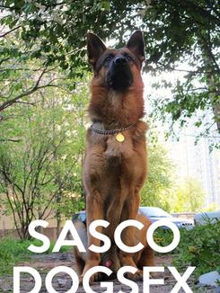 Poster:    SASCO  DOGSEX