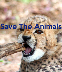 Poster: Save The Animals