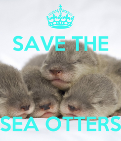 Poster: SAVE THE    SEA OTTERS