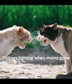 Poster:     Siblings fighting when moms gone