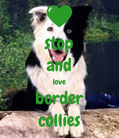Poster: stop and love border collies