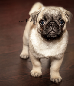Poster: Thank the dog