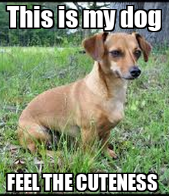 Poster: This is my dog FEEL THE CUTENESS
