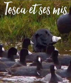 Poster: Tosca et ses mis