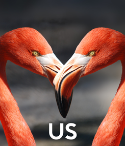Poster:     US
