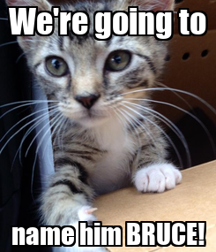 Poster: We're going to name him BRUCE!