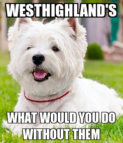 Poster: WESTHIGHLAND'S WHAT WOULD YOU DO WITHOUT THEM
