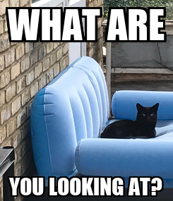 Poster: WHAT ARE YOU LOOKING AT?