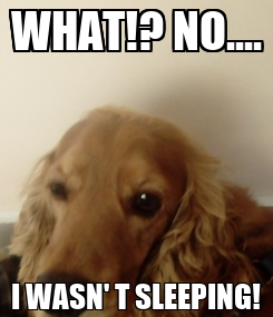 Poster: WHAT!? NO.... I WASN' T SLEEPING!