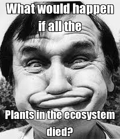 Poster: What would happen if all the Plants in the ecosystem died?