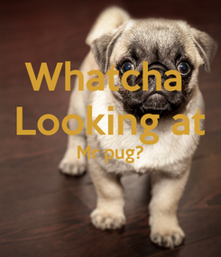 Poster: Whatcha  Looking at Mr pug?