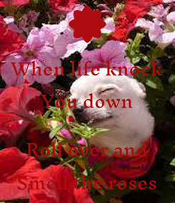 Poster: When life knock You down  Roll over and Smell the roses