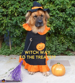 Poster:    WITCH WAY TO THE TREATS??