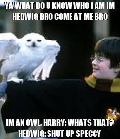 Poster: YA WHAT DO U KNOW WHO I AM IM HEDWIG BRO COME AT ME BRO IM AN OWL. HARRY: WHATS THAT? HEDWIG: SHUT UP SPECCY