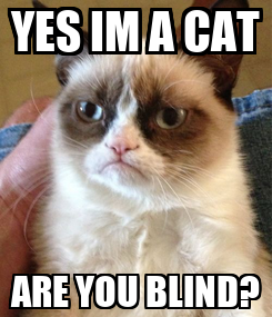 Poster: YES IM A CAT ARE YOU BLIND?