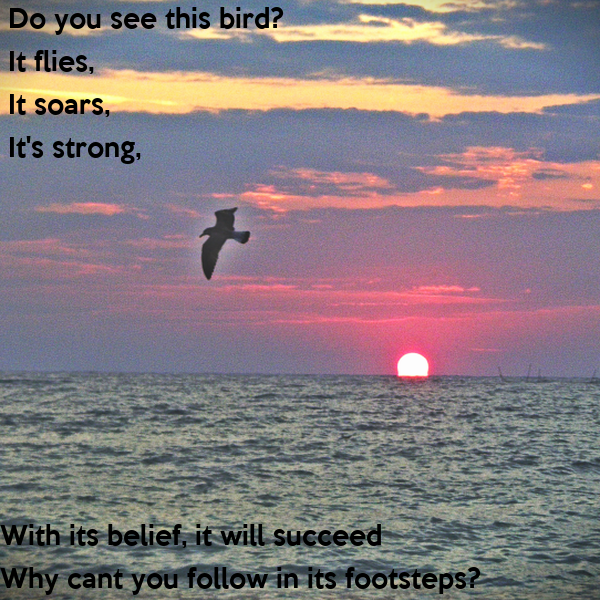 Do you see this bird?  It flies,  It soars,  It's strong,          With its belief, it will succeed          Why cant you follow