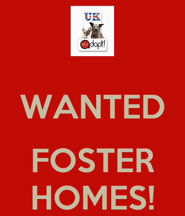 WANTED  FOSTER HOMES!