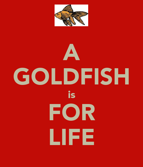 A GOLDFISH is FOR LIFE