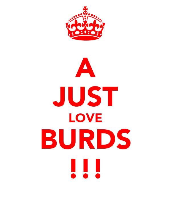 A JUST LOVE BURDS !!!