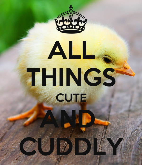 ALL THINGS CUTE AND  CUDDLY