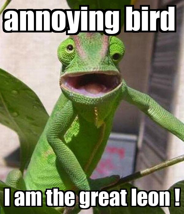 annoying bird  I am the great leon !