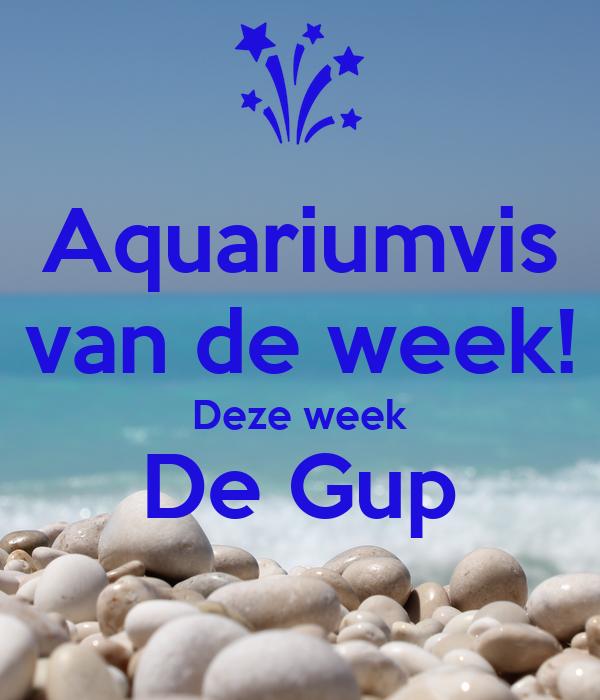 Aquariumvis van de week! Deze week De Gup