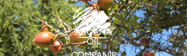 ARGANA OIL  COMPANIE