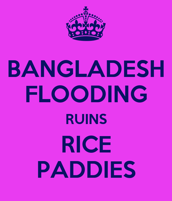 BANGLADESH FLOODING RUINS RICE PADDIES