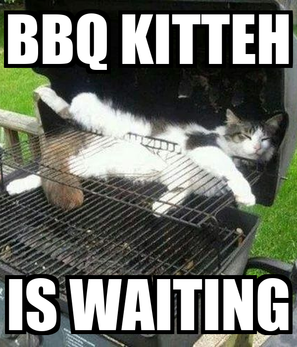 BBQ KITTEH IS WAITING
