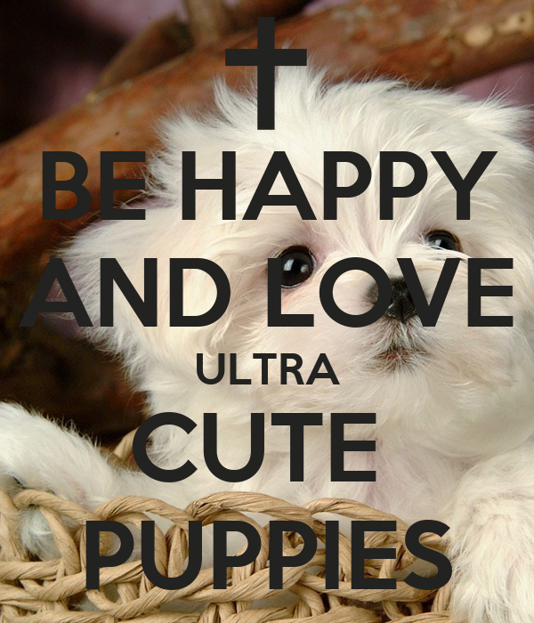 BE HAPPY AND LOVE ULTRA CUTE  PUPPIES