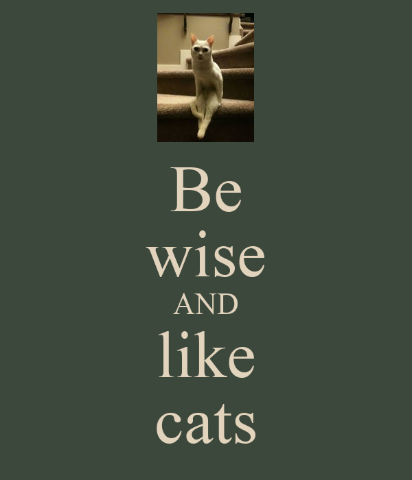 Be wise AND like cats