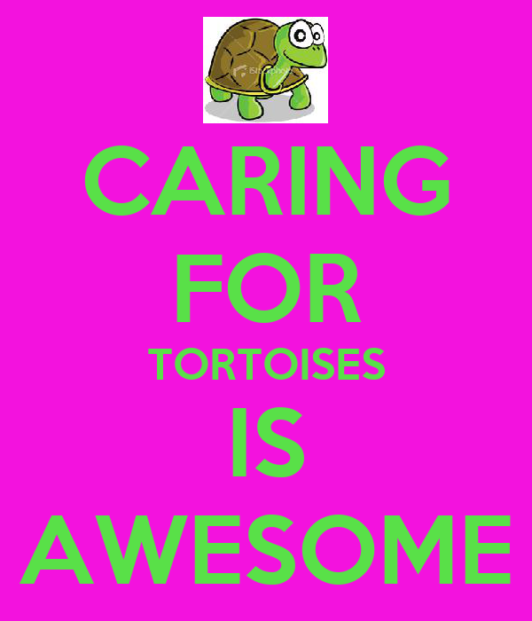 CARING FOR TORTOISES IS AWESOME