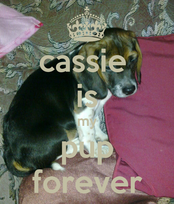 cassie  is my pup forever