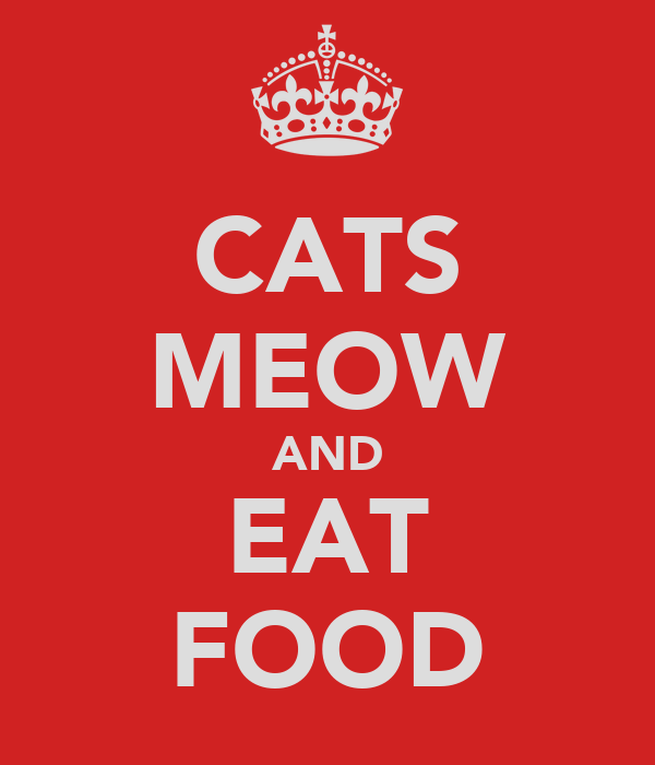 CATS MEOW AND EAT FOOD