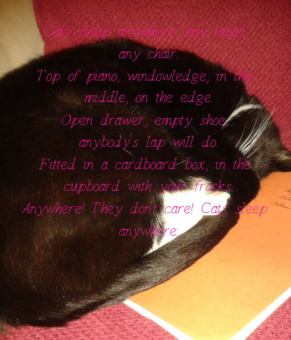 Cats sleep anywhere, any table,  any chair. Top of piano, window-ledge, in the  middle, on the edge. Open drawer, empty shoe,  anybody's lap will do. Fitted in a cardboard box, in the  cupboard