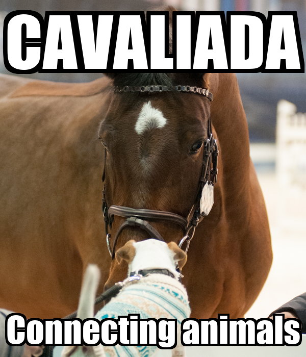 CAVALIADA Connecting animals