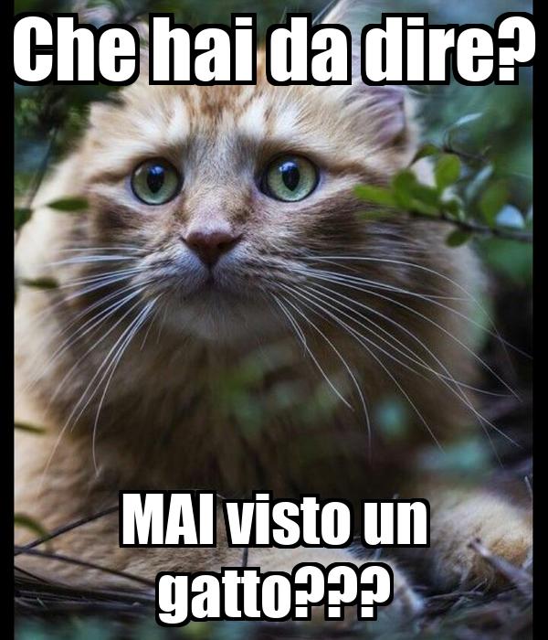 Che hai da dire? MAI visto un gatto???