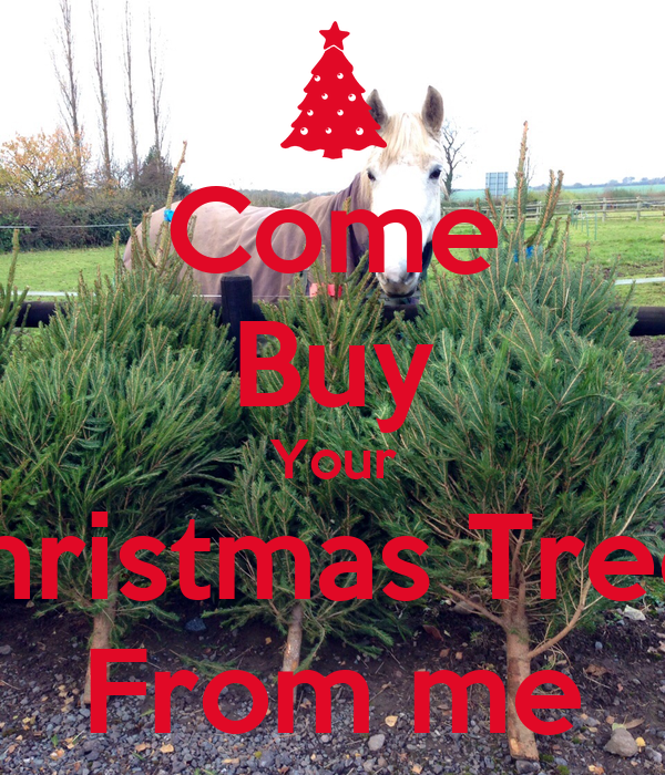 Where Does Christmas Trees Come From: Come Buy Your Christmas Trees From Me Poster