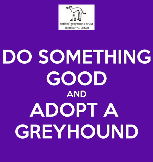 DO SOMETHING GOOD AND ADOPT A  GREYHOUND