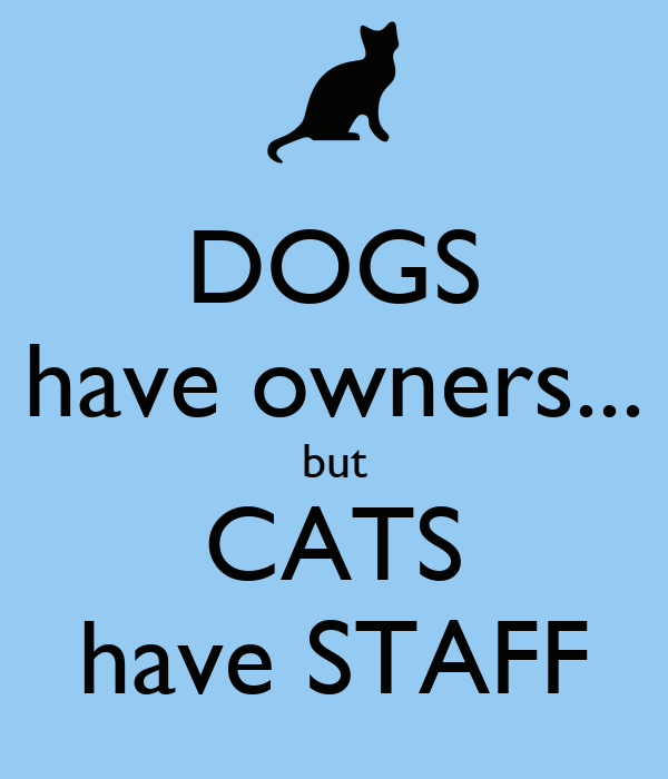 DOGS have owners... but CATS have STAFF