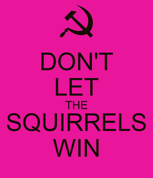 DON'T LET THE SQUIRRELS WIN