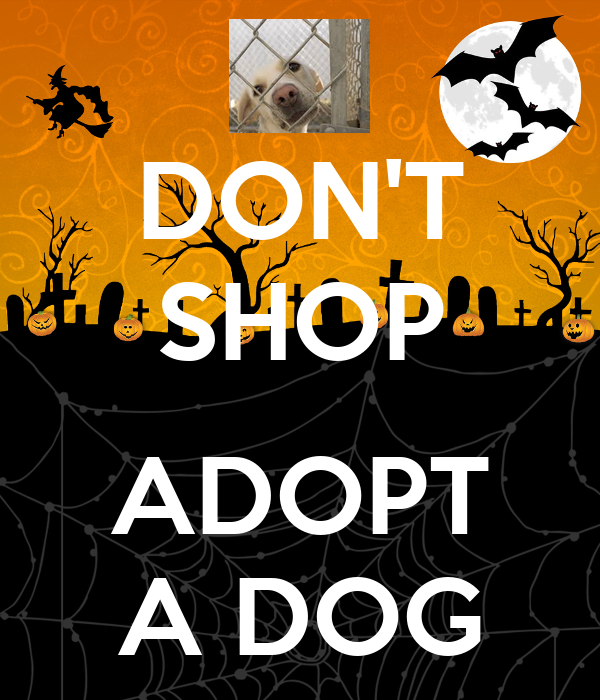 DON'T SHOP  ADOPT A DOG