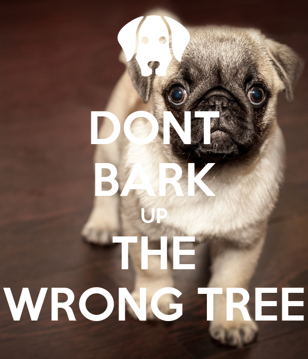 DONT BARK UP THE WRONG TREE