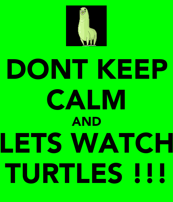 DONT KEEP CALM AND LETS WATCH TURTLES !!!