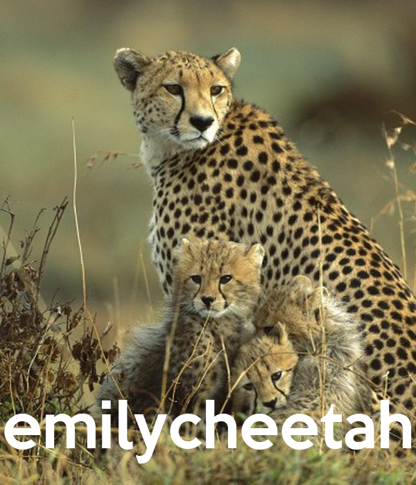 emilycheetah