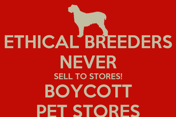 ETHICAL BREEDERS NEVER SELL TO STORES! BOYCOTT PET STORES