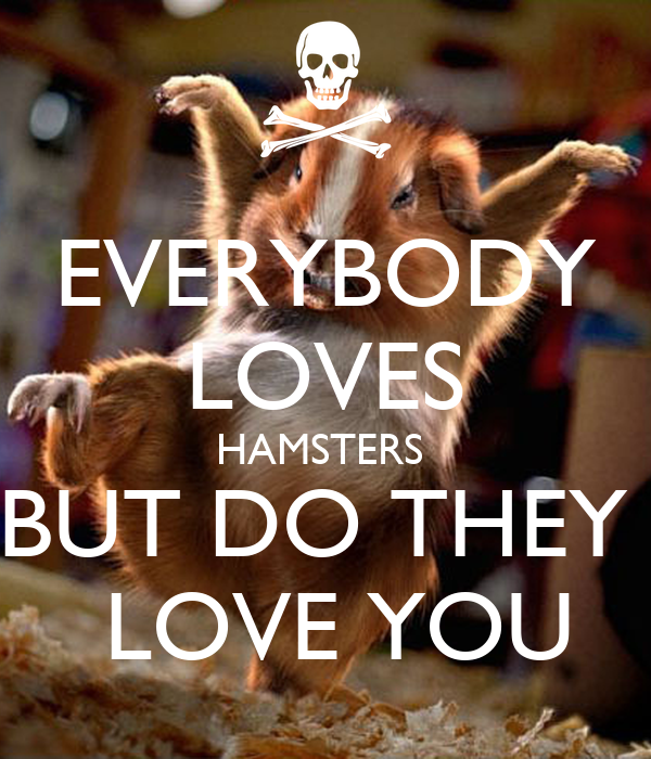 EVERYBODY LOVES HAMSTERS  BUT DO THEY   LOVE YOU